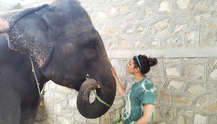 Photo Gallery - Childcare & Elephant Volunteering