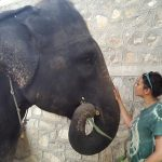 elephant volunteering India1