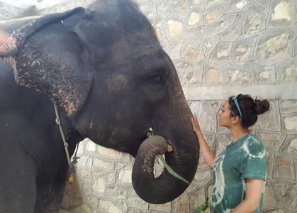 elephant volunteering India1