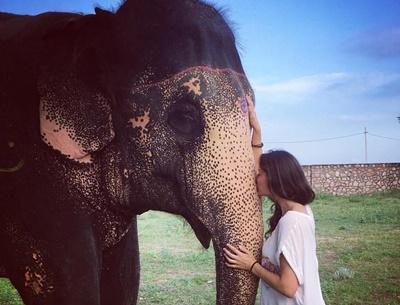 volunteering with elephants in India